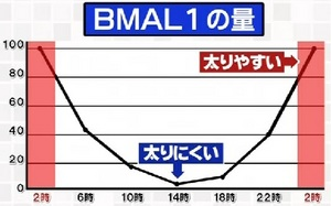 BMAL1の量