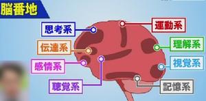 8つの脳番地
